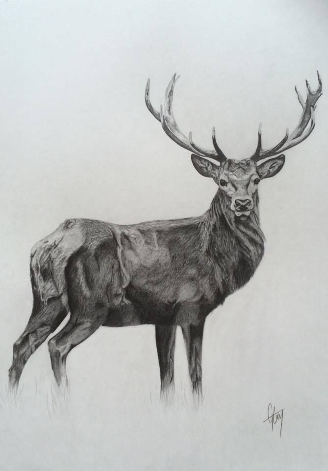 7 Reindeer Drawing Realistic For Free Download On Ayoqq Reindeer Coloring Pages Reindeer Drawing Drawings Realistic Reindeer