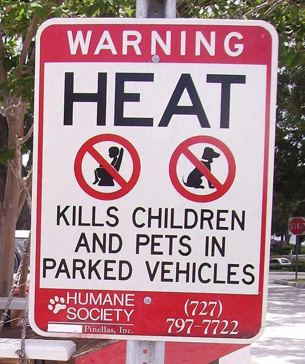 """""""HEAT KILLS"""". A good reminder on these Hot Summer Days in Australia... (Please Don't) leave your children alone in parked cars, even for a minute, and also watch out for you pets too, if you must leave them in the motor vehicle, wind down the window and leave some water for them, """"HEAT KILLS"""" ALL OVER THE WORLD. v@e"""