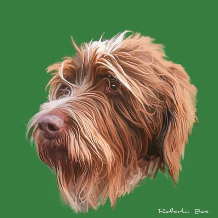 14 best Griffon love images on Pinterest | German wirehaired pointer ...