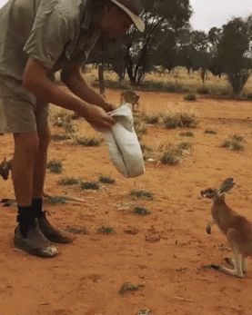From the Kangaroo Dundee series. This man fosters orphaned joeys in Australia.