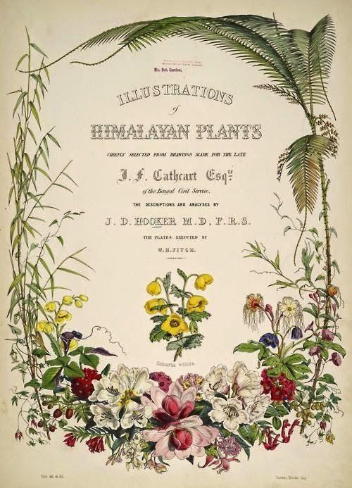 El maravilloso encanto de las láminas con ilustraciones botánicas.
