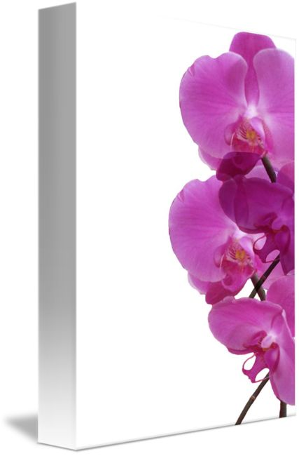 """""""Pink+orchids+composition""""+by+Vivien+Jane+C,+Rome+//+A+pattern+of+pink+orchids+designed+from+my+original+photograph+taken+in+Italy.+//+Imagekind.com+--+Buy+stunning+fine+art+prints,+framed+prints+and+canvas+prints+directly+from+independent+working+artists+and+photographers."""