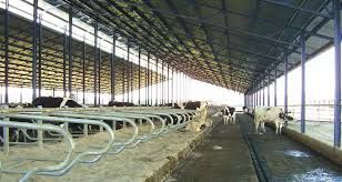 Cooperación internacional ayuda en la adaptación de fincas lecheras al cambio climático
