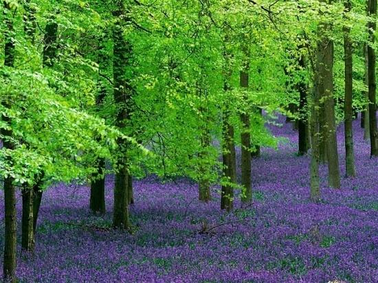 I love the green & the purple.