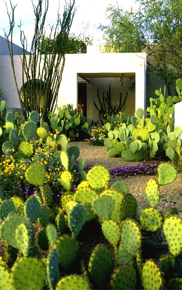 images about xeriscape designs on Pinterest