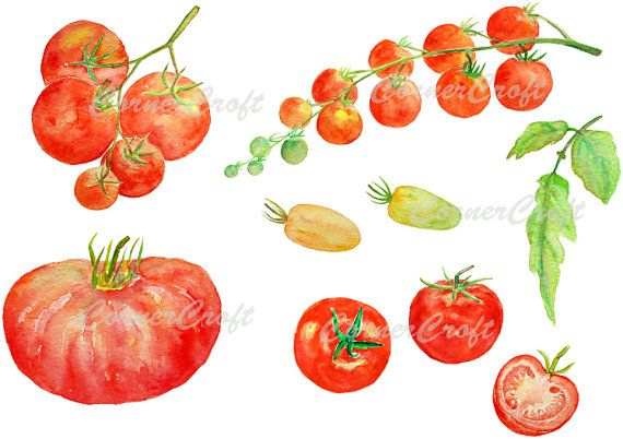 9 Hand painted watercolour vegetables variety of red tomatoes, yellow tomatoes, truss of tomatoes, beef tomato and a leaf for instant download.  They