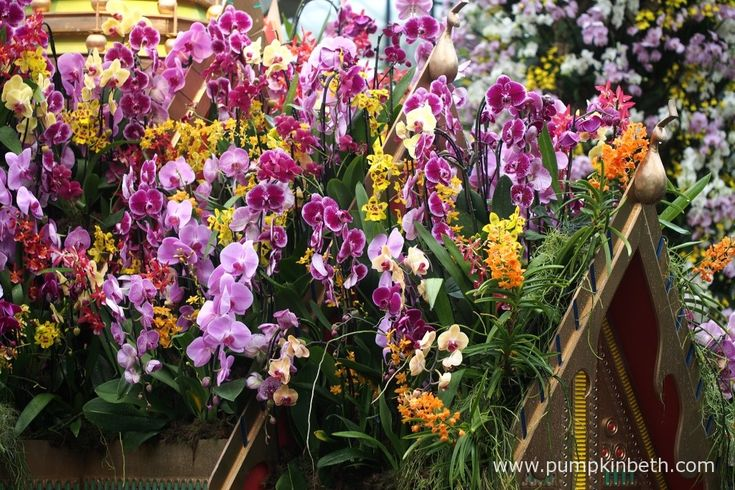 A closer look at the cheerfully coloured Phalaenopsis, Ascocentrums, and Oncidiums that decorate the roof of the Thai Palace, the centrepiece of the Orchid Festival, at the Royal Botanical Gardens, Kew.