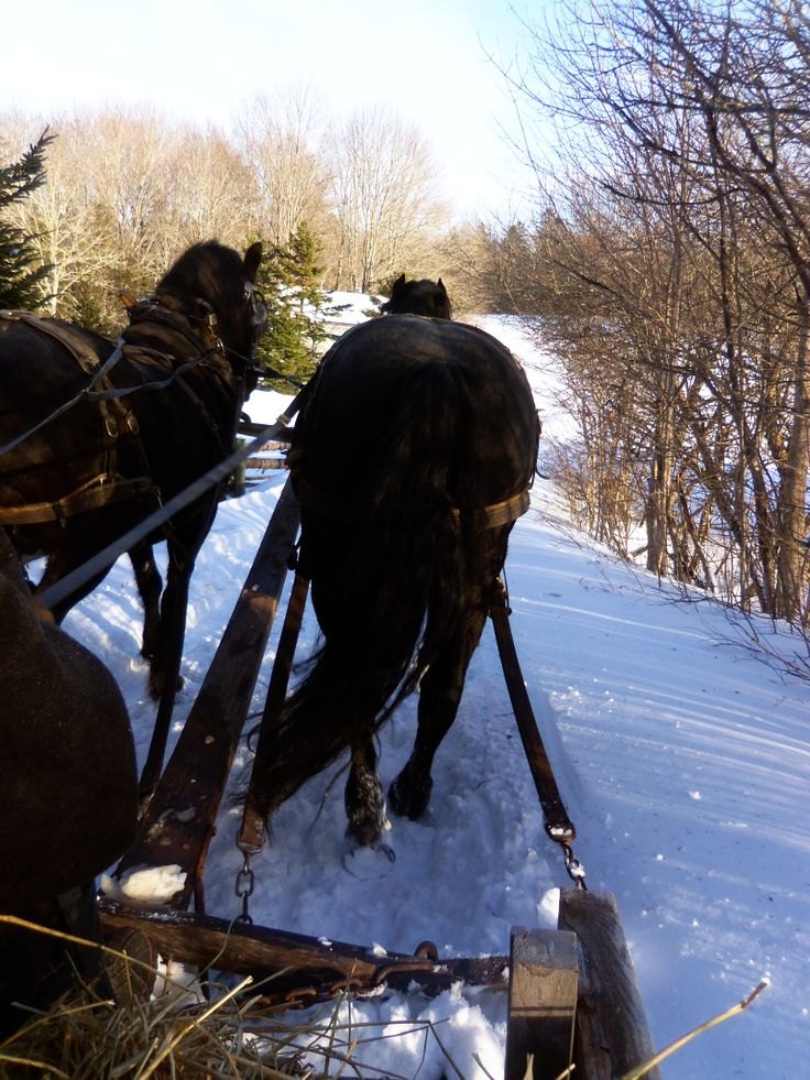 Goin on a sleigh ride, Ross Farm, New Ross Nova Scotia