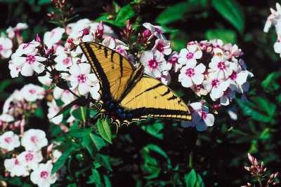 Here is a list of plants that attract butterflies, with their respective common and Latin names. The Old Farmer's Almanac presents a list of butterfly-attracting plants.