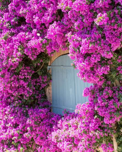 These hot pink climbing vines are the definition of swoon-worthy, but the delicate blooms can really take the heat.   - CountryLiving.com