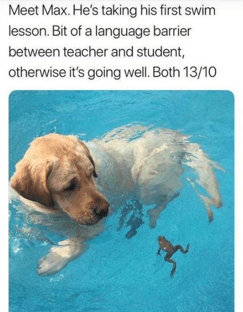 Swimming Lesson #funnydogs