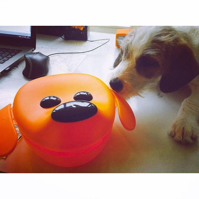 Unser Business Partner Schnitzel ist super begeistert von der Brotdose  #lunch #dog #officefoodie #superschnitzel #lunchbox #tupperware #foodie #whatshouldieat #office #business #ilovemydog #berlin #instafood #foodblogger