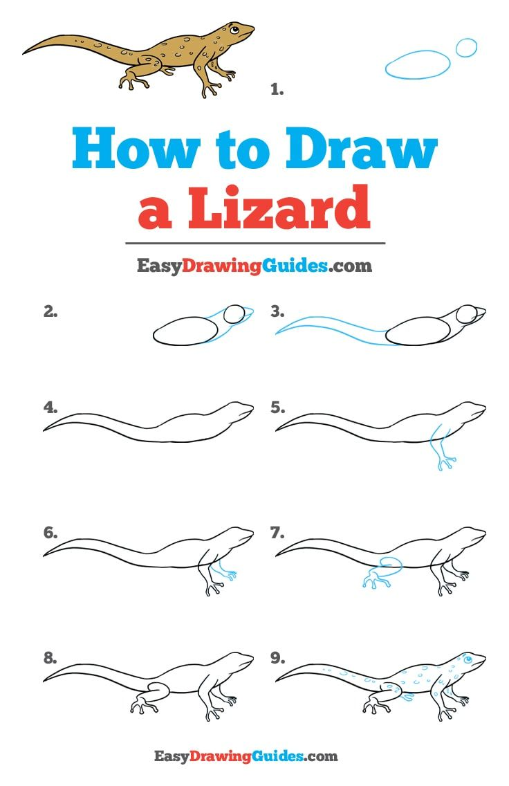 How To Draw A Lizard Really Easy Drawing Tutorial Step By Step