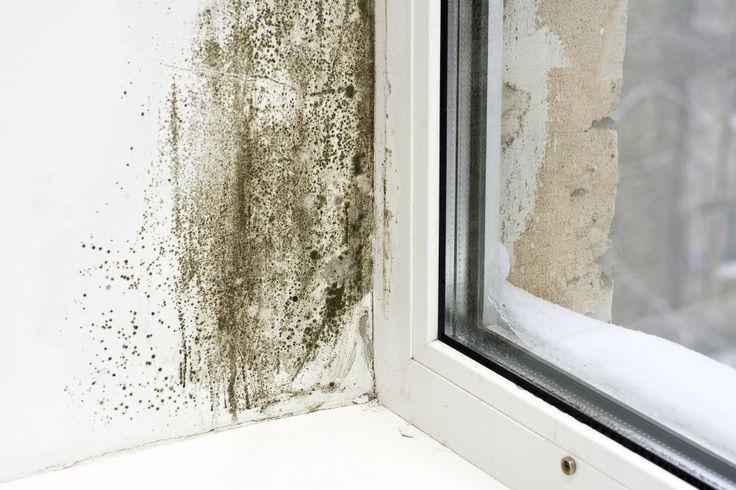 Cómo quitar manchas de moho de la pared