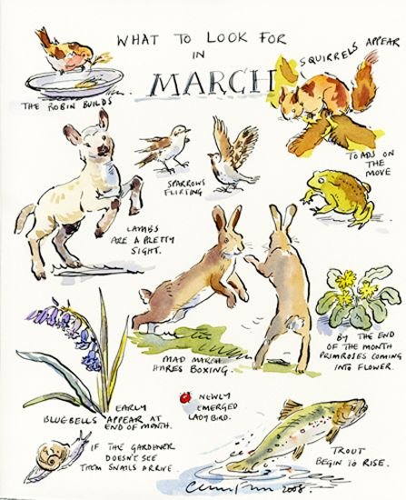 What to look for in March ~ Claire Fletcher Art