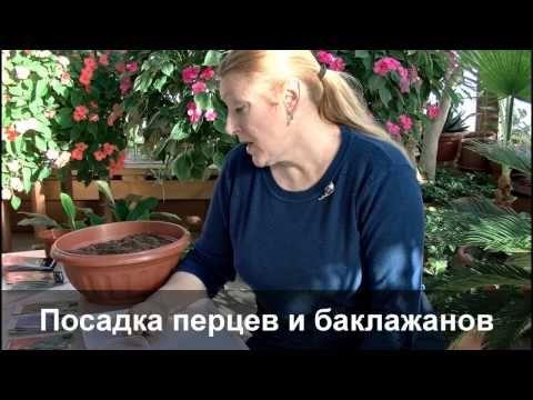 """Видео-урок """"Посадка семян перца и баклажана"""" - YouTube"""