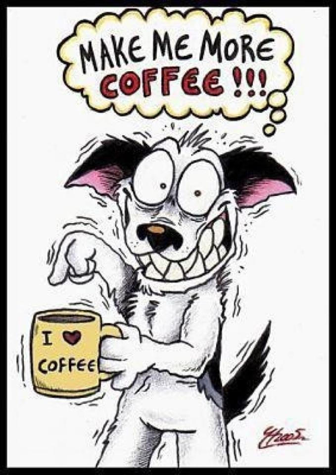 M-m-m-more Coffee!!!!: Addiction Memorial, Crazy Dogs, Funny Coff, Memorial Lovers, Memorial Shops, Funny Stuff, Memorial Humor, Memorial Quotes, Amser Memorial