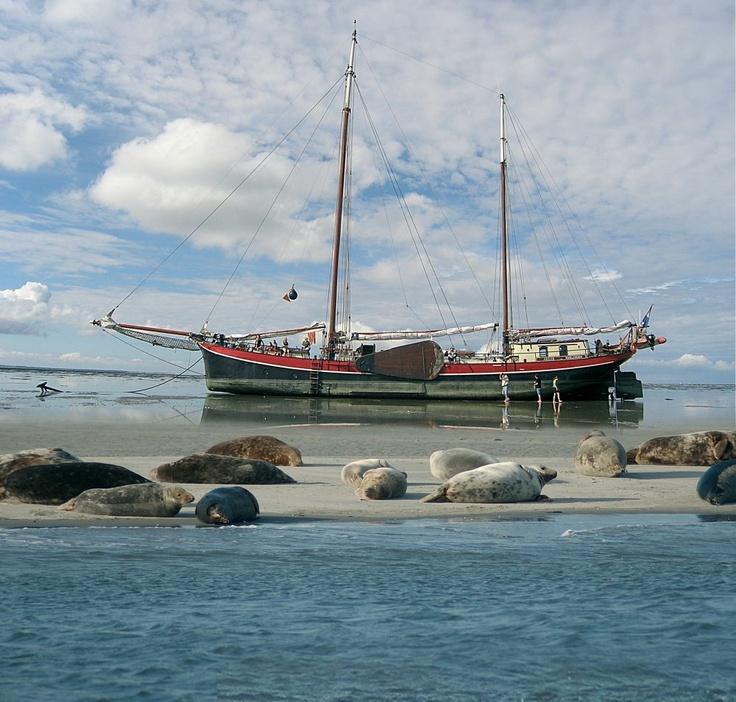 Droogvallen met het schip, zandbanken en zeehonden.