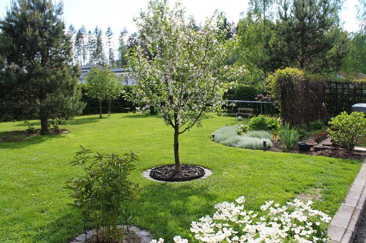 Multsin puutarha ja koti: Nurmikon rajaaminen istutuksista