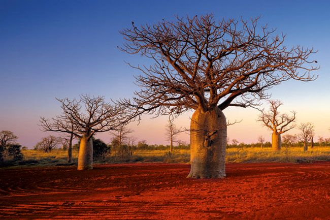 Kimberley Boabs | Amazing images of untouched Australia | News.com.au