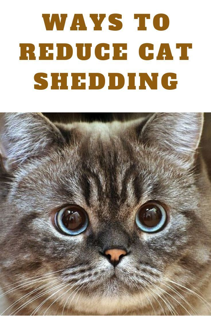 Are You Finding Cat Hair On Your Clothes All Over The Furniture Or Just Floating Around In The Air In 2020 Cats Cat Behavior Cat Shedding