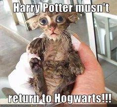 Harry Potter funnies lol