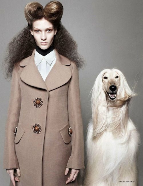 "What's a fashion shoot without an Afghan hound? ""Best in Show"" shoot from British Vogue."