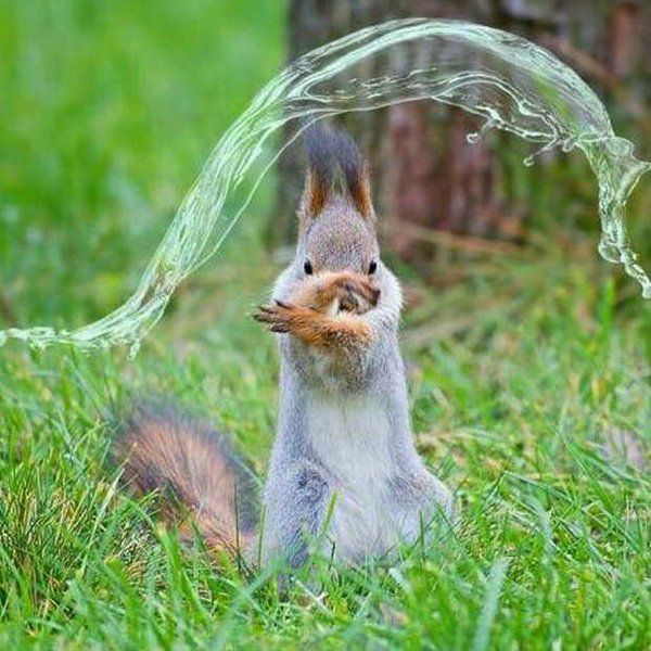 Water bending squirrel?!?