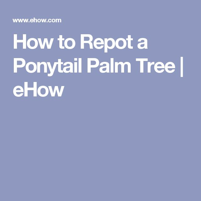 How to Repot a Ponytail Palm Tree | eHow