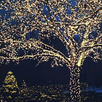 Solar Powered Led Fairy Lights 55 Ft