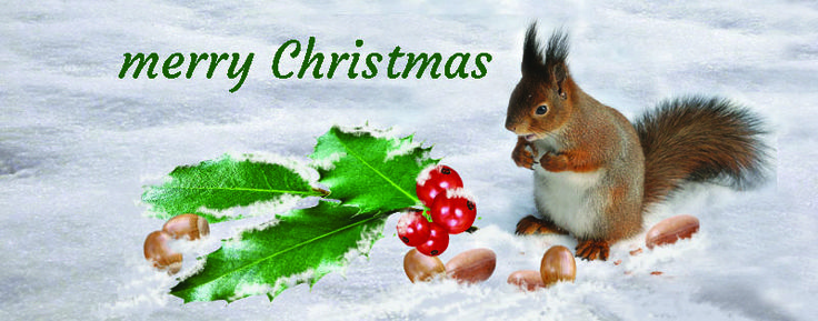 Christmas facebook photo 800X315 jpg