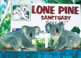 Image result for lone pine koala sanctuary