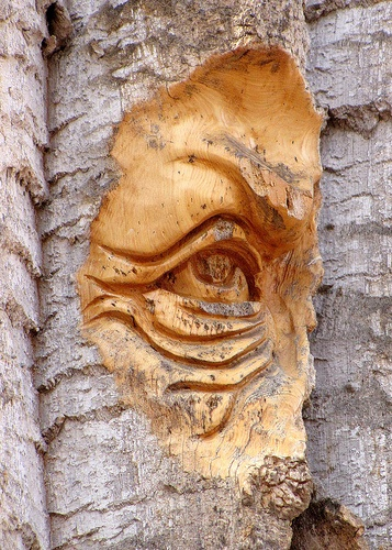 Best images about woodcarving tips and references on