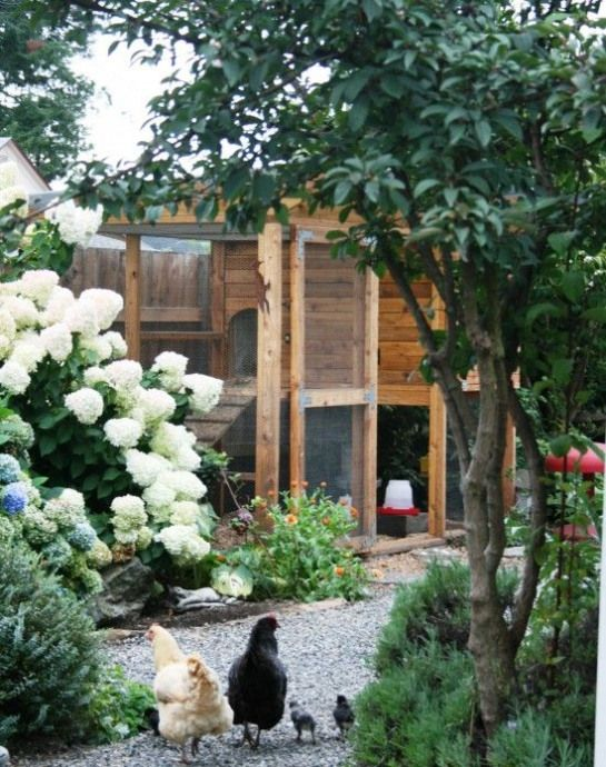 2dc249a057c98399c04fa8f56367bceb - Free Range Chicken Gardens Jessi Bloom