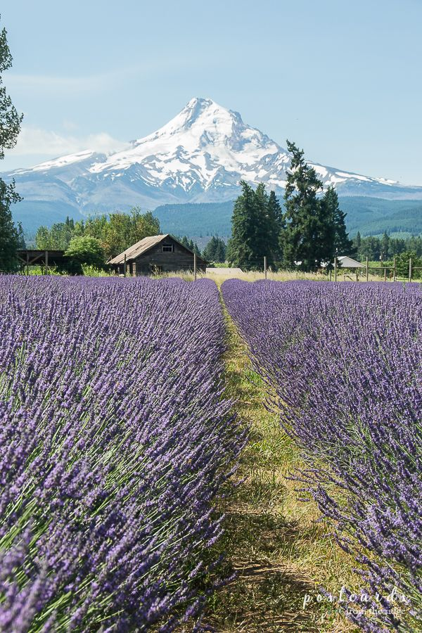 15 Things to see in Seattle and The Pacific Northwest