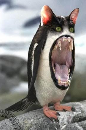 Penguin will eat you!: Monster Penguin, Funny Things, Strange Animals, Penguin Cat, Kevin Dayhoff, Penguins, Wtf, Animals Funnypics