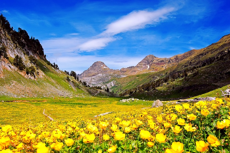 explosion of floral color in Benasque, Aragón, Spain.
