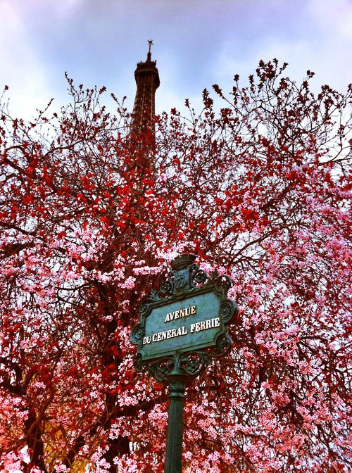 I love Paris in spring blossom (great collection of images)