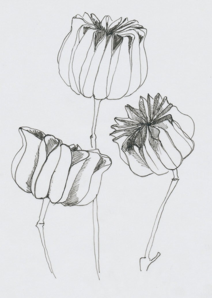 Sketch Flowers  Pieces of Art by Tanja van Wijk  www.piecesofart.nl