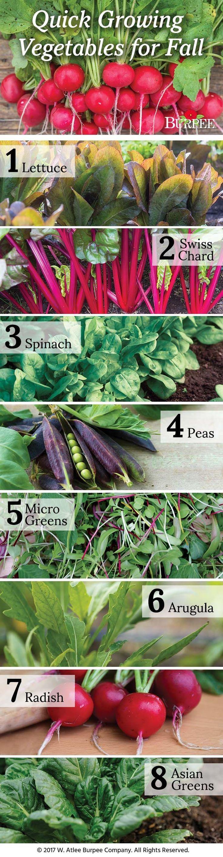 best 25 harvest lettuce ideas on pinterest