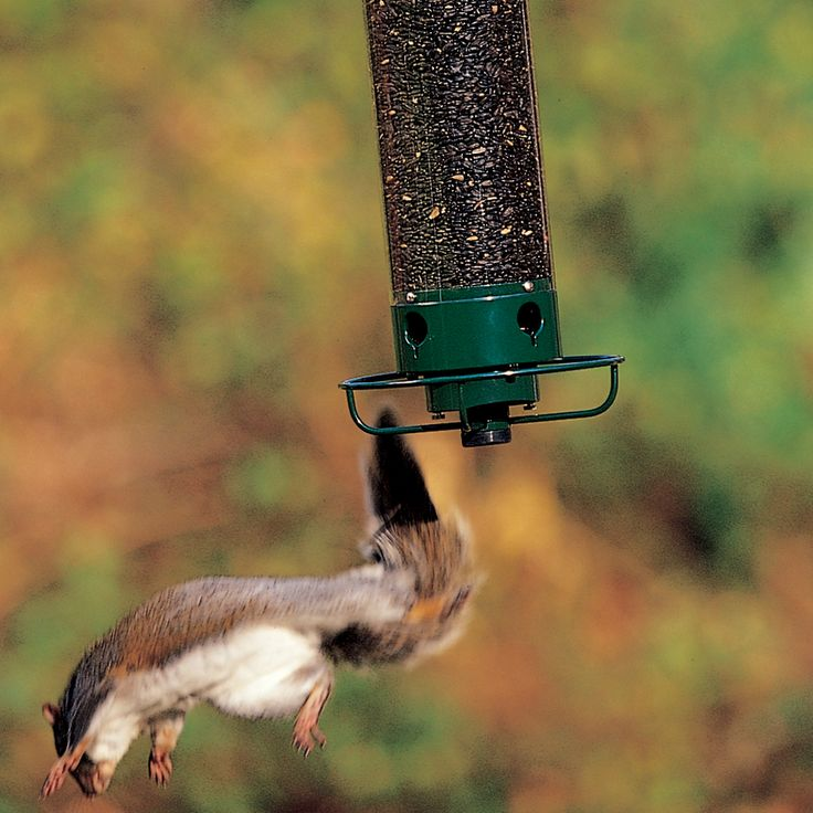 Yankee Flipper--a motorized squirrel-proof feeder by Droll Yankees. The video is hilarious! www.youtube.com/watch?v=bv9wTYMw5iA