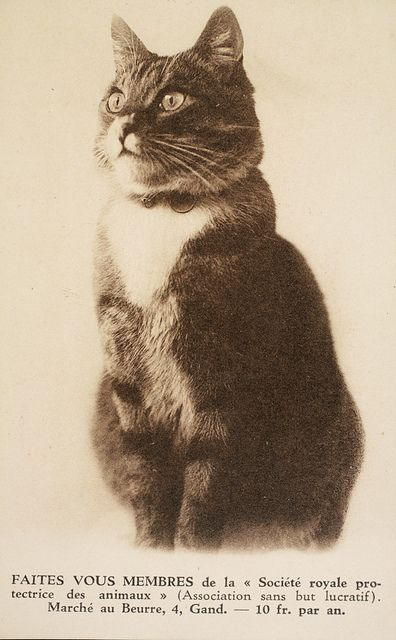 17 Best images about Vintage CATS. on Pinterest | Cats ...