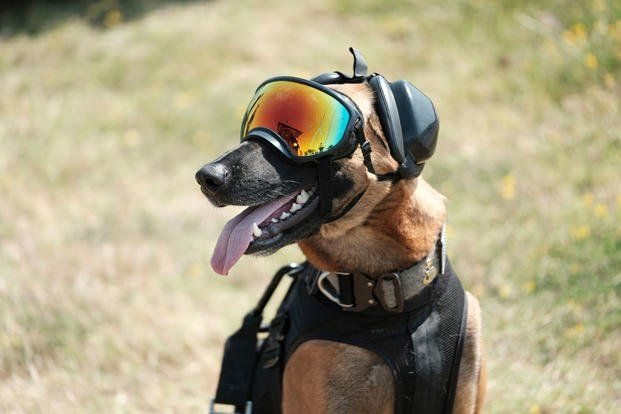13 Photos Of Military Working Dogs Being Awesome Military