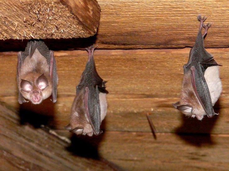 Amazing picture face closeup bat wildlife animal