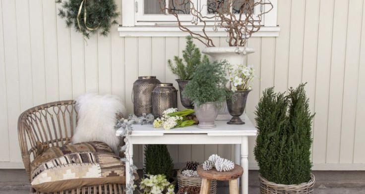 En samling av vintergrønt, juleroser og trollhassel gir en salig harmoni med julestemning. Foto: Mester Grønn