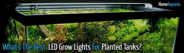What's The Best LED Grow Lights For Your Aquarium Plants?