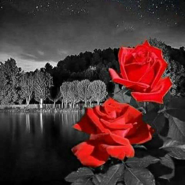 Розы картинки спокойной ночи