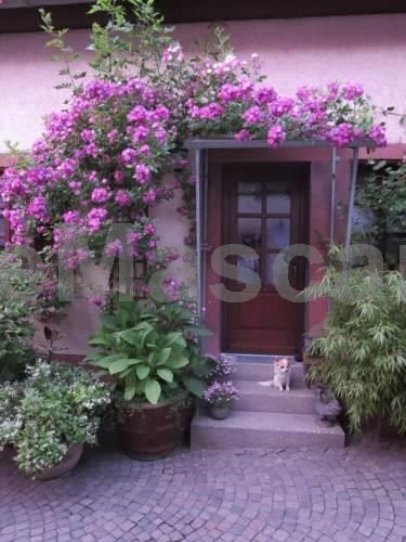 Ferienhaus Karlsruhgasse Billigheim-Ingenheim Situated in Billigheim-Ingenheim in the Rhineland-Palatinate Region, this detached holiday home is 43 km from Baden-Baden. Guests benefit from terrace. There is a seating area, a dining area and a kitchen equipped with dishwasher.