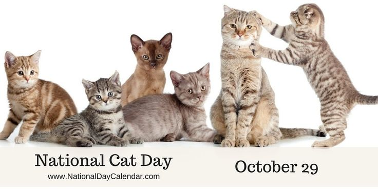 "Did you know it's National Cat Day today? This calendar can help you with schedule some fun social media posts based on some of the lesser known ""holidays""! http://www.nationaldaycalendar.com/national-cat-day-october-29/"