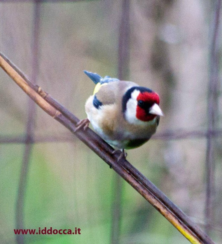 Birdwatching Sardinia